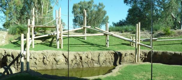 Phoenix Zoo Orangutan II